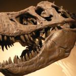Attraction Dinosaur Fossils