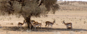 Package Safari Desert Augrabies Falls south africa Vacation Package