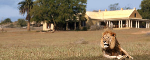 hotel-gorah-elephant-camp