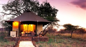 white-elephant-safari-lodge-01