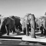 gorah-elephant-camp-03