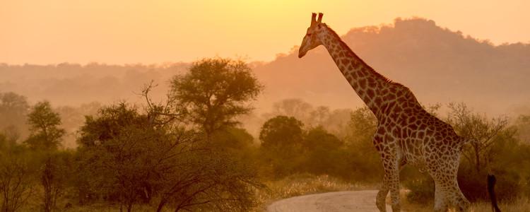 Kruger Park Region