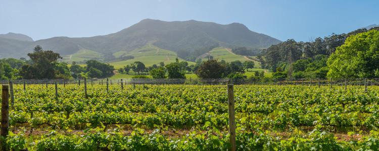 Winelands Region