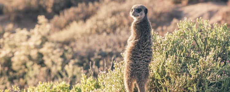 Karoo and Little Karoo Region